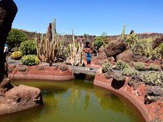 Cactus garden - Cesar Manrique