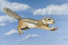 flying ground squirrel - by tom palmore