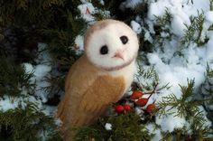 Совёнок сипухи из шерсти рукоделие, сова, моё, хобби, игрушки, зима, Фото, Своими руками, длиннопост
