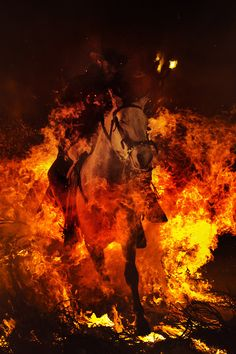 """Horse fire. A man rides a horse through a bonfire in San Bartolome de Pinares, Spain, in honor of Saint Anthony, the patron saint of animals onJanuary 16, 2013.On the eve of Saint Anthony's Day, hundreds ride their horses trough the narrow cobblestone streets of the small village of San Bartolome during the """"Luminarias"""", a traditional festival that dates back 500 years and is meant to purify the animals with the smoke of the bonfires, and protect them for the year to come.  PH"""