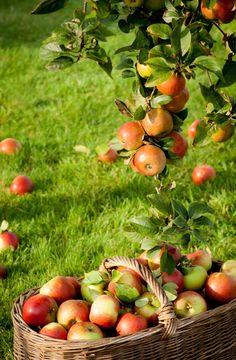 http://www.pariscotejardin.fr/2013/03/les-vergers-des-artisans-du-vegetal-edition-2013/