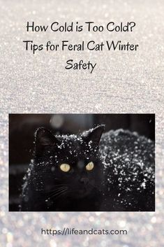 Winter weather hazards for outdoor cats. Tips for feral cat winter safety. How to make a feral cat shelter and feeding station. Cold weather care for ferals Outside Cat Shelter, Feral Cat Shelter, Feral Cat House, Outdoor Cat Shelter, Outdoor Cats, Feral Cats, Animal Shelter, Shelter Dogs, Animal Rescue
