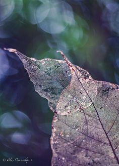 Nature Photography by Alex Greenshpun
