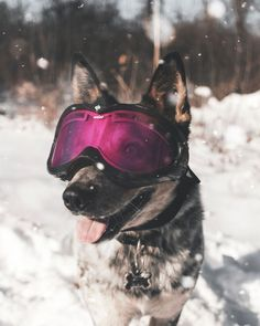 These extra-wholesome dog memes are giving us new life. Check out some of our favorite dog memes now and don't forget to pin your favorite! Funny Dog Memes, Funny Dogs, Cute Dogs, Kitten Wallpaper, Animal Wallpaper, Wallpaper Wallpapers, Iphone Wallpapers, Dog With Glasses, Ski Goggles