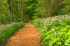 woodland garden path inspiration for wooded property