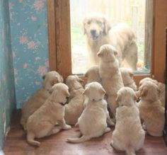 cute dogs. more here http://artonsun.blogspot.com/2015/05/cute-dogs-more-here_45.html