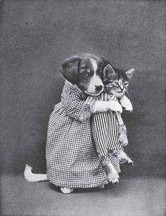 Винтажные фото дружбы котеек и собак. oldphotos, милота, кот, Собака, прошлое, длиннопост