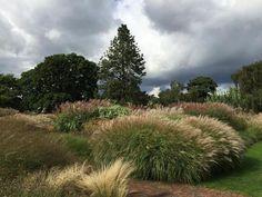 (2) Kew Gardens (@kewgardens) | Twitter tarafından gönderilen fotoğraflar ve videolar
