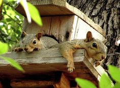 It is not simple as we see it on some of the documentaries or on some of the movies. The squirrels are hardworking animals that want to have safe and comfortable home for living.