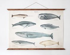 whales poster - vint