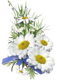 I love daisies!!!