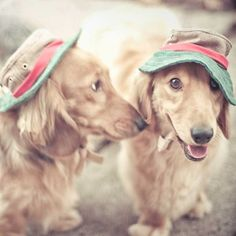 dogs wearing hats photograph by Carl Christensen