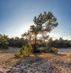 De Loonse en Drunense duinen Udenhout Nederland  Hollandfotografie.nl