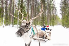 The Ultimate Itinerary for Lapland and Arctic Circle, Finland - Bruised Passports