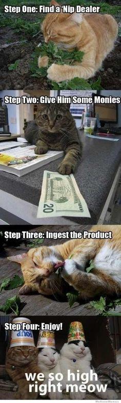 animal humor. cats. meme. catnip. drugs. funny. original source?