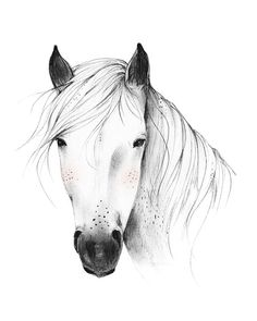 Wildpferd 8 X 10 11 X 14 Kunstdruck von KelliMurrayArt auf Etsy