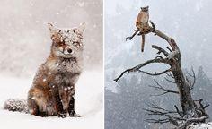 snow.jpg (709×433)