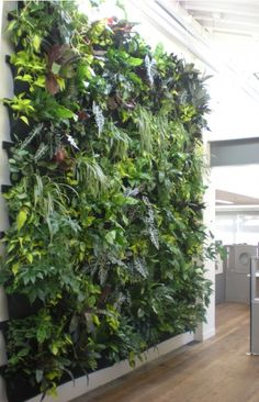 interior plant wall, self watering indoor plants