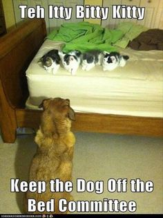 Attack Of The Funny Animals - 30 Pics