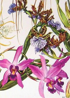 watercolor flowers, Botanical illustration. pink flowers