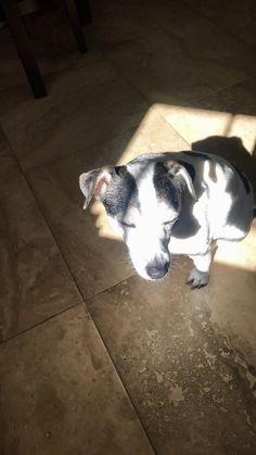 She loves the spotlight http://ift.tt/2GG12LY