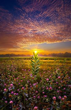 One Last Kiss | Wisconsin Horizons By Phil Koch. Lives in Mi… | Flickr