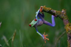 awesome frog is awesome