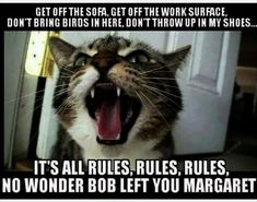 We Have Found The Funniest Memes For Your Caturday! - Funny Animal Quotes - - Cheezburger Image 9179586816 The post We Have Found The Funniest Memes For Your Caturday! appeared first on Gag Dad. Funniest Cat Memes, Funny Animal Memes, Cute Funny Animals, Funny Animal Pictures, Funny Cute, Cute Cats, Silly Cats, Memes Humor, Funny Memes