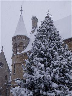 нσ нσ нσ мεяяү cняιsтмαs тяεε 。* 。Christmas Tree in Broad Street, Oxford