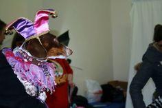 Dachshund Halloween Costumes & Contest Results | Crusoe Dachshund  ZOEY