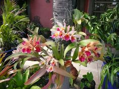 Orchids growing on palm tree.  add cattleyas to front palm tree
