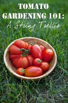 Tomato Gardening 101: A String Trellis via @Shaina Pagani Olmanson | Food for My Family