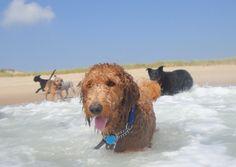 Beach Day!
