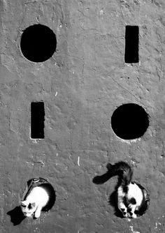 "500px / Photo ""котозмей"" by Alexey Menschikov"