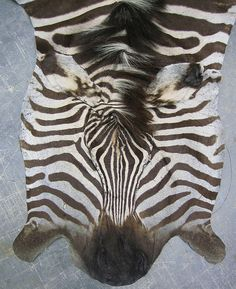 African Gameskin Group (Pty)Ltd Mane N Tail, Exotic, African, Game, Venison, Games, Gaming, Toy