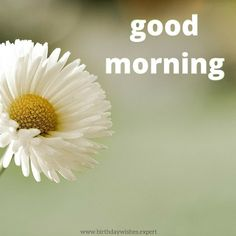 Good Morning image with white flower