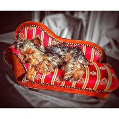 Get Yours Here: https://itsayorkielife.com/now-thats-a-bed-fit-for-a-yorkie-found-at/