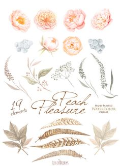 Wedding Watercolor Clipart, Peach Peonies, Roses Flowers, Feathers, Hand painted…
