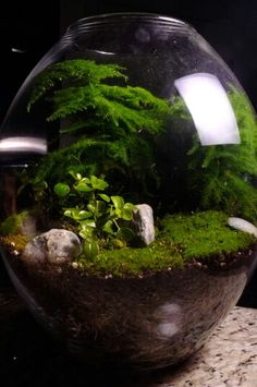 My mini rain forest #terrarium