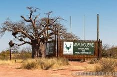 Mapungubwe National Park is a Unesco World Heritage Site of cultural importance. Here are 15 things to do at there. World Heritage Sites, Safari, Places To Go, Things To Do, National Parks, Classroom Expectations, Plants, Travel, Outdoor