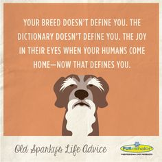 Your #breed doesn't define you. The dictionary doesn't define you. The #joy in their #eyes when your human comes home—now that defines you.