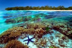 Great barrier reef, Australia Possibly someday I will be able to cross this off my Bucket List!