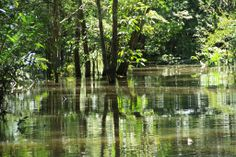 Amazonia.Floresta.Amazon.Forest.