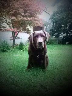 January🐶Grouchy Puppy Newsletter January 2016, June, Dog Lovers, Labrador Retriever, Highlights, Meet, Puppies, Dogs, Animals