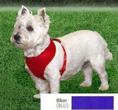 Coastal  Comfort Soft Adjustable Dog Dog Harness - Blue X-Small For Dogs 7-10 lbs *** Check out this great product. (This is an Amazon affiliate link)