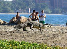 Guest Post: Photo Essay – Crocodile Sanctuary in Ixtapa, #Mexico, #travel
