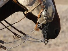 This horse is straight up in the bridle, he is wearing his bosalito as a sign of respect.  His rider has run his get down rope through it.