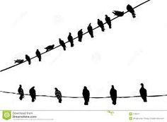 black and white birds - Google zoeken