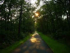 Cape Cod Rail Trail offers great hiking in Massachusetts with over 22 miles of trails.    http://adaytrip.com/great-spots-for-hiking-in-massachusetts/