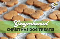 Friday Funny: 10 Hilarious Signs That Every Dog Owner Needs To See! - Ollie & Penny - ★ Musings of two spoilt Sausage Dogs! Friday Humor, Christmas Dog, Dog Owners, Dog Treats, Hilarious, Funny, Gingerbread, Sausage Dogs, Baking